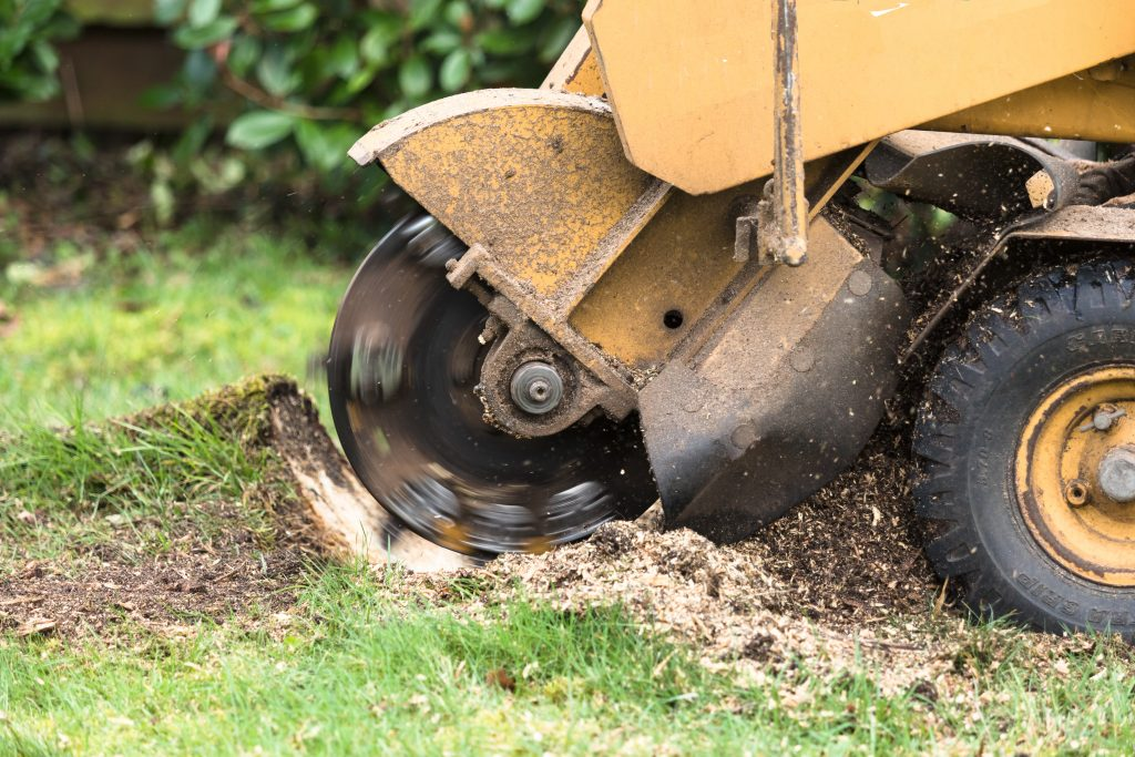 Stump Grinding Somerset